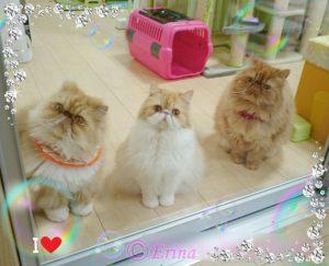 猫の体重の計りかた&ペット体重計がとっても便利!