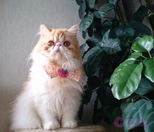 猫の性格は猫種問わず十猫十色「十人十色」!