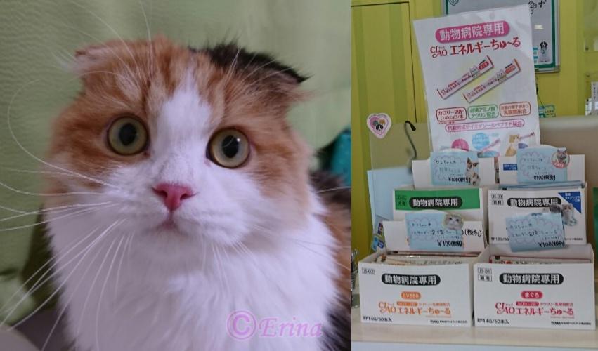 愛しきペルシャ猫&スコテイッシュ4ニャンズの秋の猫川柳六句と猫が大好きな人気のおやつ  CIAO  (チャオ)ちゅ~る♪原材料・成分・与える目安を解説!