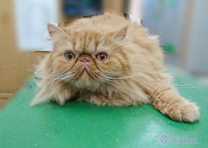 猫会話編🐱4種猫のかかりやすい病気と注意すること!