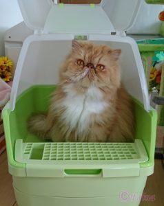うちのペルシャ猫ルネちゃんは、トイレの後は上手に隠します!