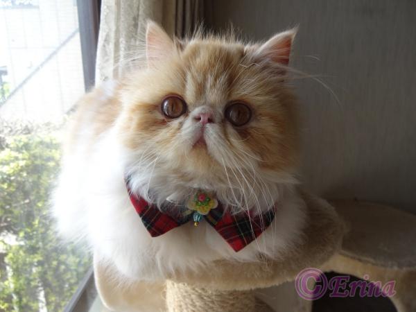 猫好きさんへ◆1年間の猫川柳 ◆ 世界で一番短い定型詩|愛猫写真と共に12句とおまけ3句の合計15句を詠んでいます♪
