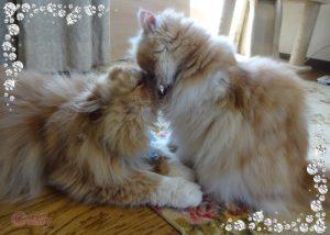 【ネコから学ぶ人生の知恵】