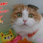 注意!猫に危険な食べ物!絶対に与えないでください!