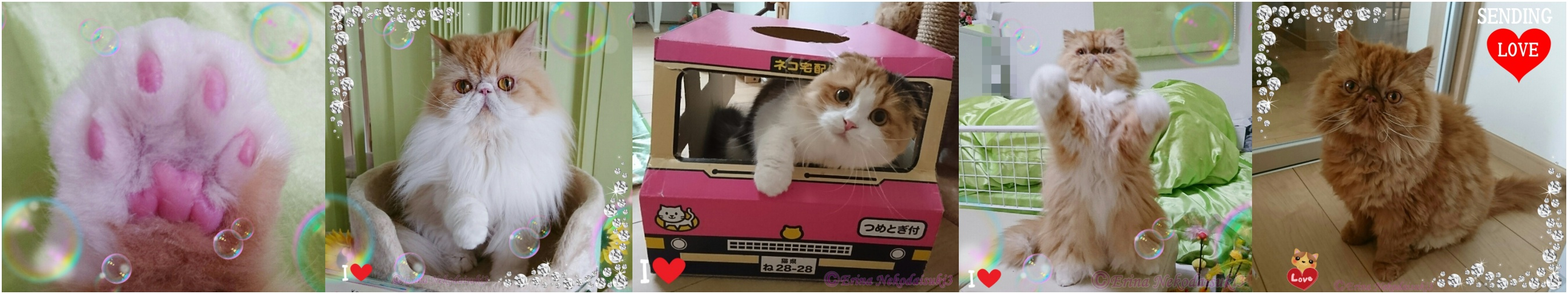 猫川柳で詠む愛猫との楽しい暮らし