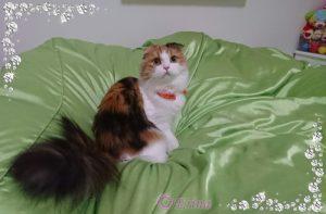 猫の1日の睡眠時間ってどのくらい?なぜ寝てばかりいるの?猫の意外な癒し効果!