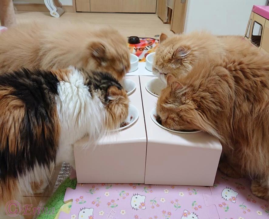 ネコちゃんの健康に良いドライフード ベスト3