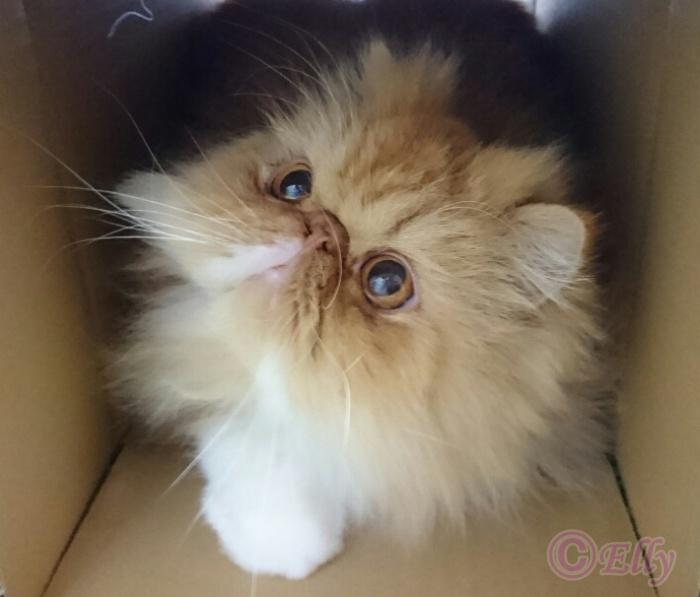 【猫の生態】猫のからだ「目の機能」について