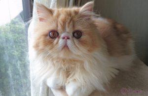 【猫の一生】猫と人の年齢換算表&年代別でみる猫の健康ケアーと病気の知識
