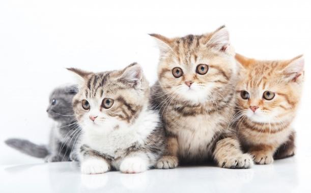 注意!人気の20品種!猫種別かかりやすい病気とは