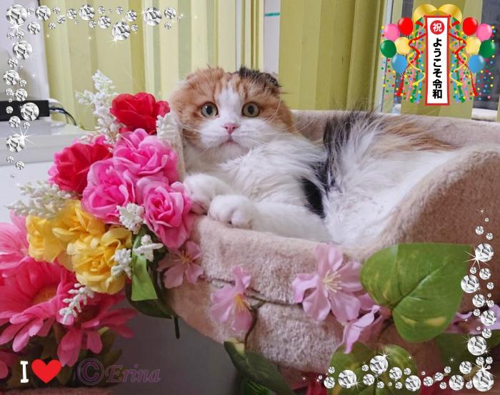 2019年5月新元号スタート!㊗「令和」を記念!5月の猫川柳シリーズ第2弾!愛猫写真と共に3句詠みました♪