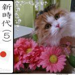 川柳と俳句の違いとは?川柳と俳句で一生を楽しむ趣味にする!猫好きで「猫川柳」を3句詠みました♪<#23 ~#25句目>