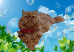 【ネコから学ぶ人生の知恵】5月より新元号「令和」スタート!心和むねこ禅 【乍雨乍晴(さうさせい)】<猫川柳#26句目>