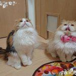 【ネコから学ぶ人生の知恵】以心伝心言わなくてもわかるニャン♪#30猫川柳、猫の聴覚が優れている理由とは