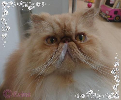 猫好き必見!「にゃるほど!」これだけは知っておきたい猫の基本知識(ネコQ&A)その①猫のルーツ編