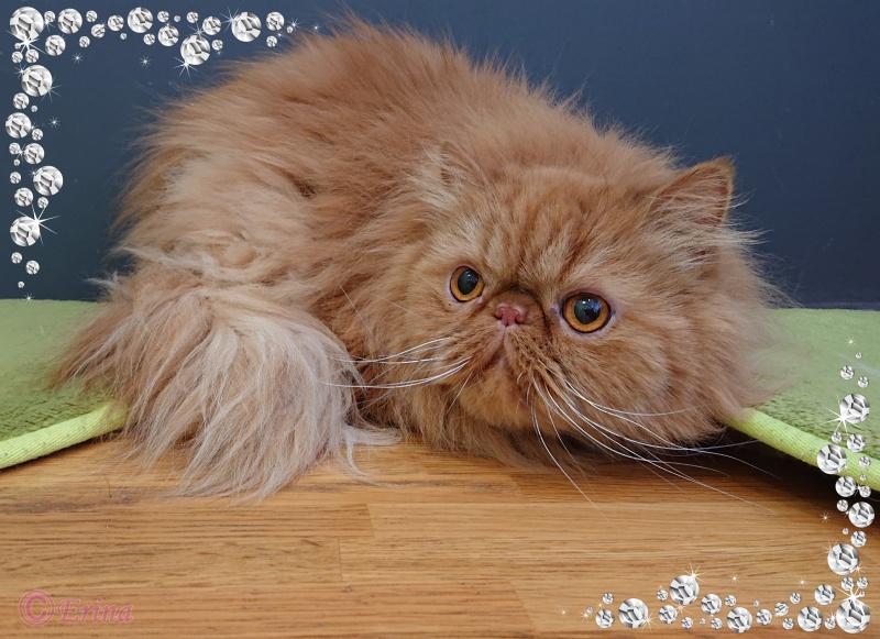実録!【動画あり】その③猫の膀胱炎の症状経過について-もしかしたら結晶が消えることを願う-|猫の腎臓病の進行を抑える薬「ラプロス」とAIM製剤