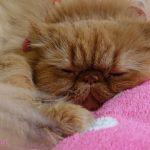 愛猫が即入院!オス猫に多い泌尿器系の病気「泌尿器疾患・膀胱結石」について