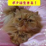 実録!【動画あり】その④猫の膀胱炎で通院その後の経過について-もしかしたら結晶が消えることを願う-
