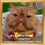 【猫川柳出版のお知らせ】【猫からのコロナニュース】その7【猫の膀胱結石の再検査結果】