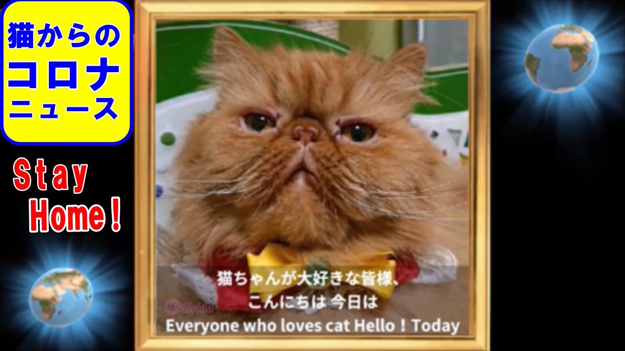 【猫川柳出版のお知らせ】【猫からのコロナニュース】【猫の膀胱結石の再検査結果】