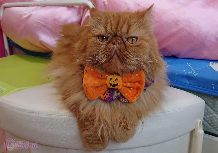 実録!その9【猫動画】#7愛猫エポ尿結石再発!緊急入院!猫からのSOSで1日遅かったら死に至った!検査結果と今後について